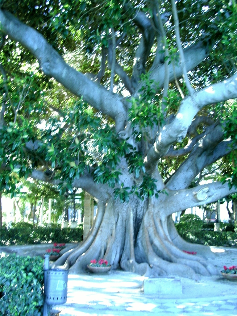 Wonderful Banyan Tree