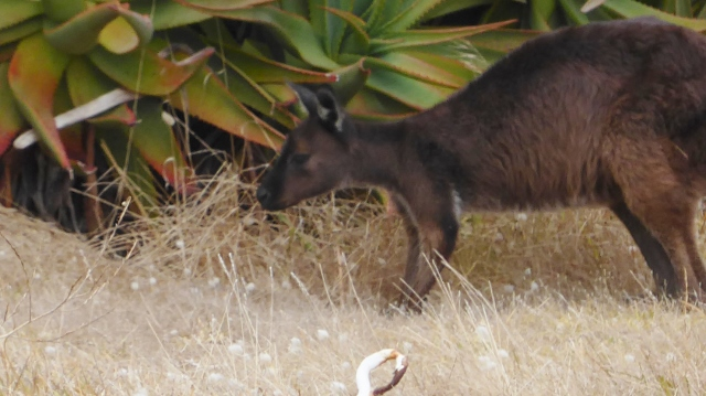One final look at a Kangaroo.