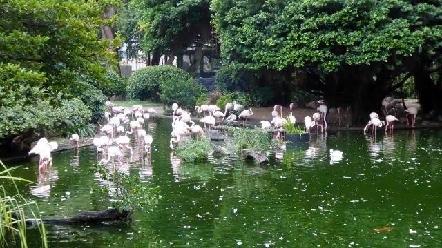 Pink Flamingos!