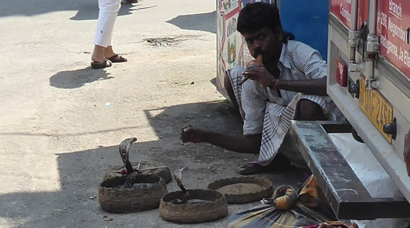 Snake Charmer outside the Hindu Temple