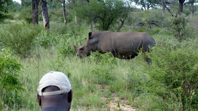 Coming upon a Black Rhino.