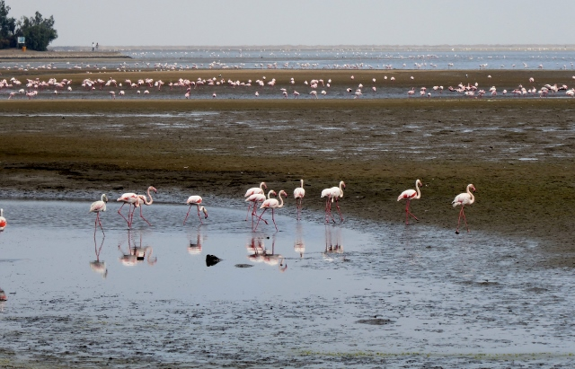 Now look at this!  The pink flamingoes of the Walvis Bay Lagoon.