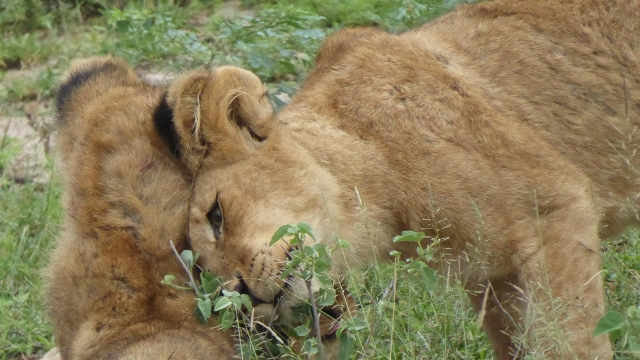 Now, how cute is that!  Mama and her cub.