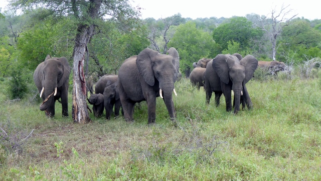 Coming across an elephant herd on the move.