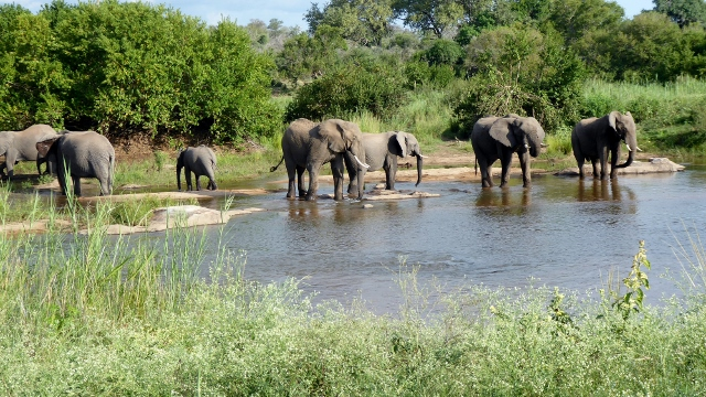 Later, we came upon elephants bathing in the Sabie River.