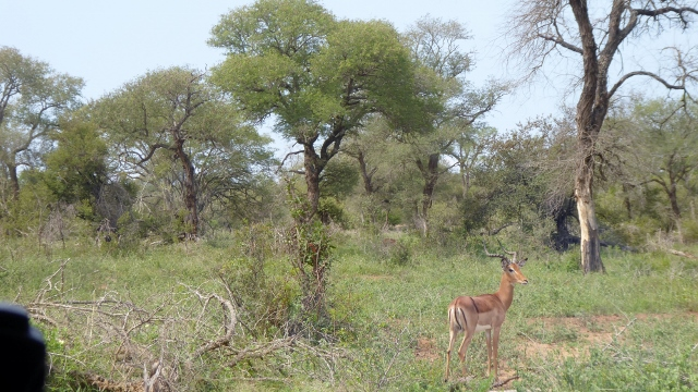 Impala spotted along the way.