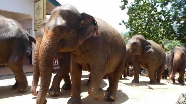 It's the Baby Elephant Walk!!!