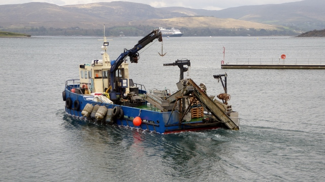 And that's when the mussel harvester goes into action!