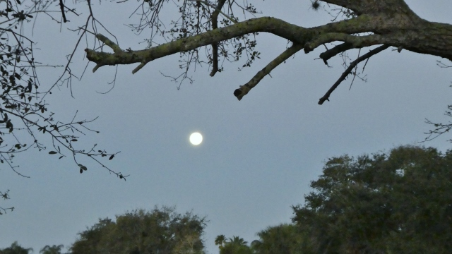 The supermoon seen as it sets in the morning.