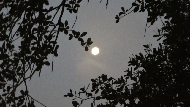 Super Pink Moon, morning Apil 9, 2020
