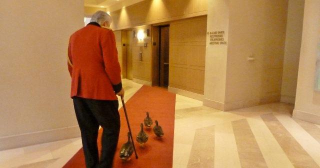 Twice a day, the ducks take the elevator to the lobby.